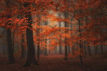 Nebliger Herbstwald in tiefen Rottönen . von Saskia Dingemans