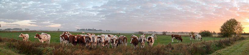 Nieuwsgierige koeien van Lieke Roodbol