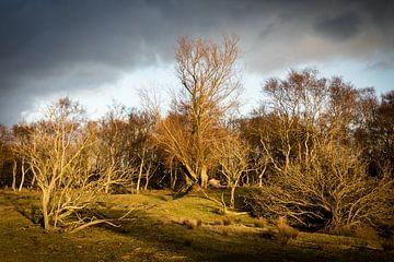 Kale bomen in de winter met laagstaande zon van
