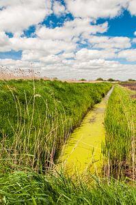 Groen slootje in de polder
