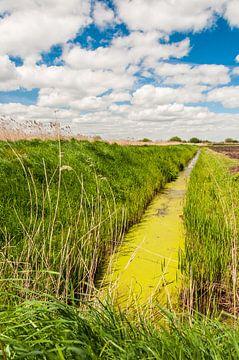 Groen slootje in de polder von Richard Janssen