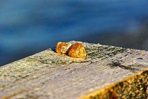 geen  Oostzee goud, geen amber