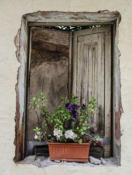 Das Fenster von Odette Kleeblatt