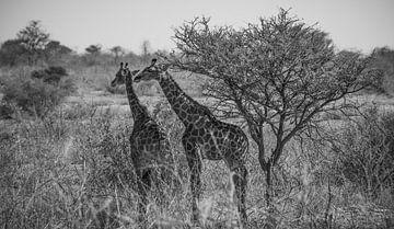 A la recherche d'un peu d'ombre sur Joris Pannemans - Loris Photography