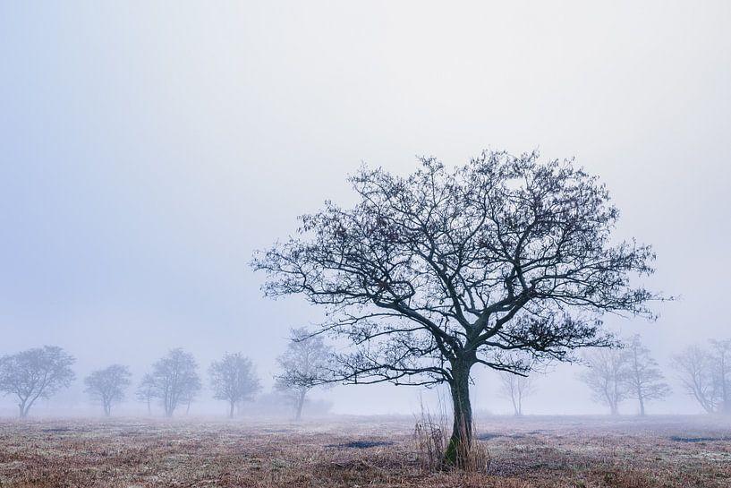 Boom in het rietland van Wilko Visscher