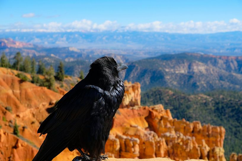Big Bastard, Bryce Canyon, United States von Colin Bax