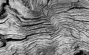 Strukturen im Baumstamm von Daan Kloeg