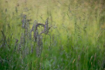 Gras van Wolbert Erich