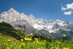 Bergen, blauwe lucht en groene weides