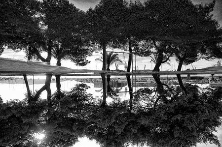 Reflection sur Ewald Zomer
