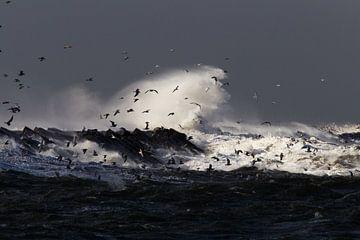 Storm IJmuiden zuidpier van Menno van Duijn
