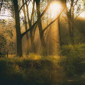 L'automne dans la forêt sur Eus Driessen