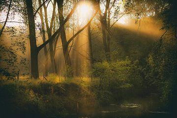 Herfst in het bos van Eus Driessen