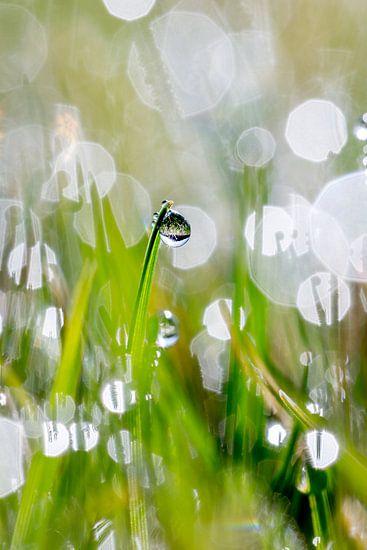 Gras bij ochtendlicht van Marco Schep
