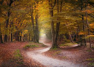Warme herfstkleuren in de Kaapse Bossen op de Utrechtse Heuvelrug van Henno Drop