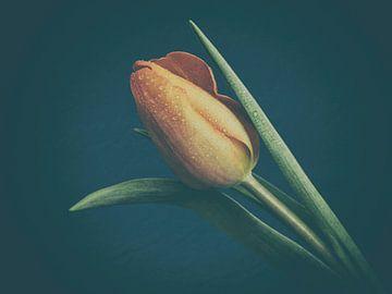 Tulp van Marianne Twijnstra-Gerrits