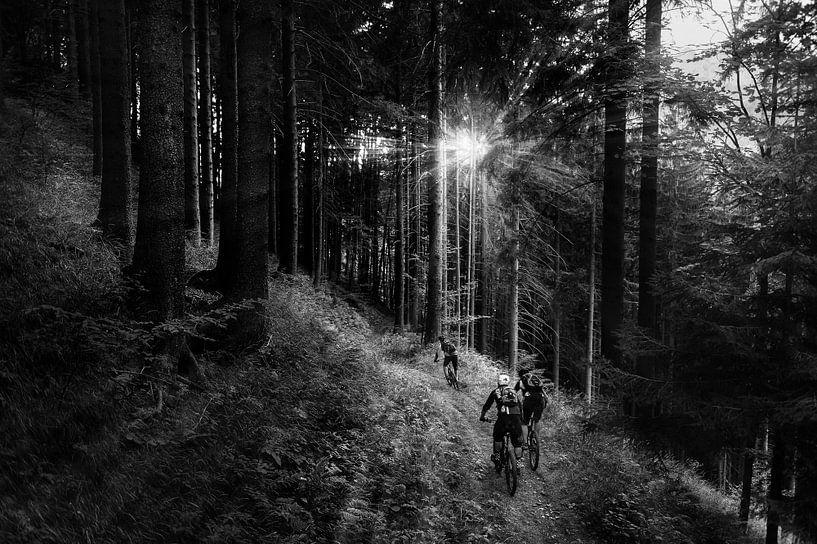 Into the light van Jarno Schurgers
