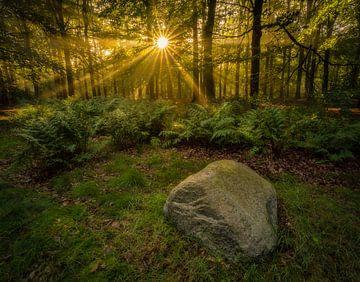 Ein früher Morgen in den Wäldern. von justus oostrum