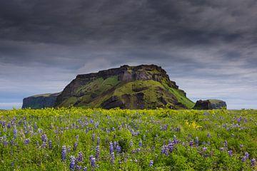 Isländische Blumenteppiche. von Steven Driesen