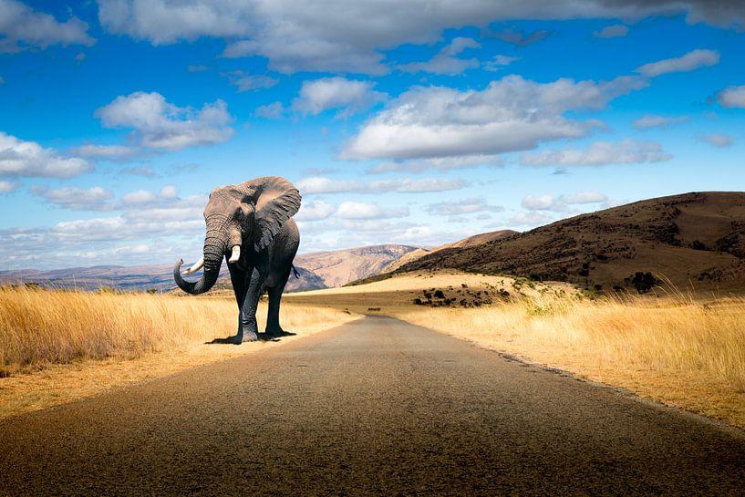 Walking Elephant van Thomas Froemmel