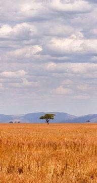 eenzame boom in afrika von Paul Jespers
