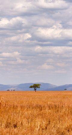eenzame boom in afrika van Paul Jespers