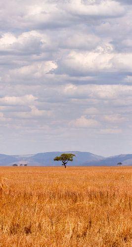 eenzame boom in afrika van