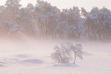 Schnee in den Niederlanden von elma maaskant