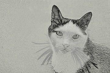 Katze Mickey von Gera Wijlens