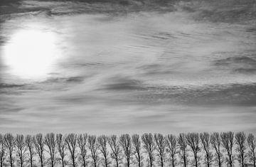 Les peupliers dans le polder sur Jan Sportel Photography