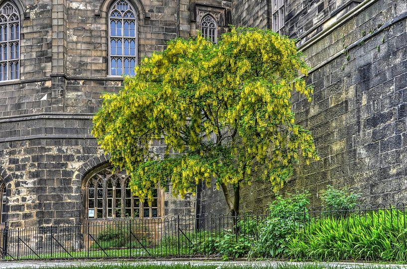 Goudenregen in Manchester van Frans Blok