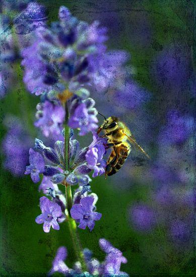 Lavendel mit Biene van Rosi Lorz