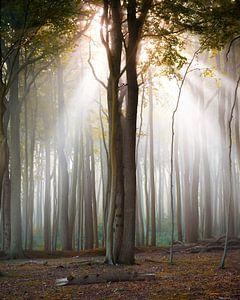 Herfstlicht in het bos van Martin Wasilewski