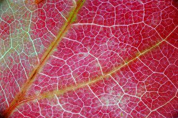 Boomblad in herfstkleur van Peet Romijn
