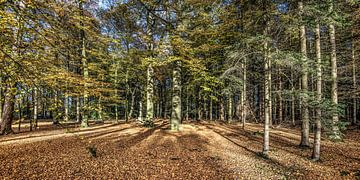 Zicht op het bos van Bakkeveen in Friesland in het najaarszonnetje van Harrie Muis