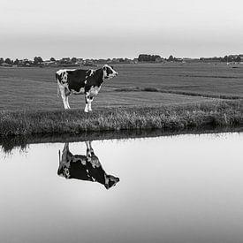 Koe aan het water van Patrick Herzberg