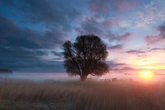 The tree van Olha Rohulya
