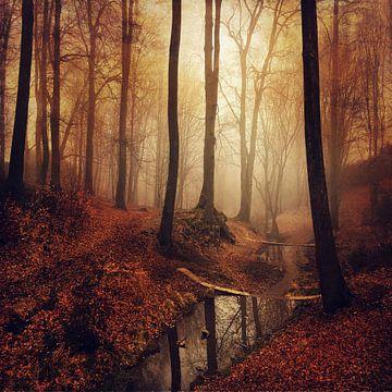 Forest Creek van Dirk Wüstenhagen