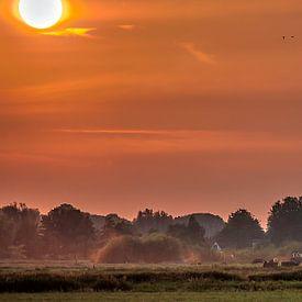 Red dust van Robin Pics