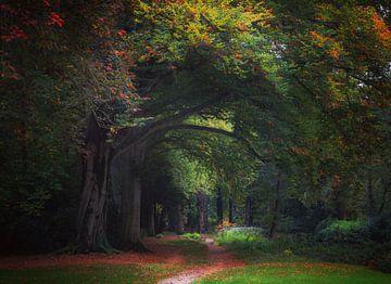Marcher dans la forêt sur M. Cornu