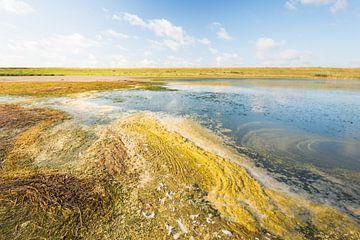 Naturschutzgebiet Flaauwers Inlaag in der Sommersaison von Ruud Morijn