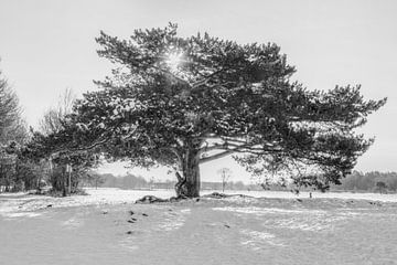 Großer Baum im Schnee von Michar Peppenster