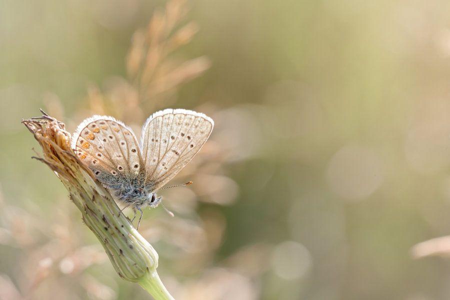 Zonnebadende vlinder ... (vlinder, Zomer, natuur)