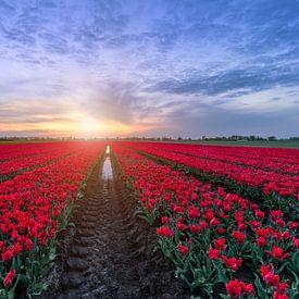 Red carpet to the sunset sur Costas Ganasos