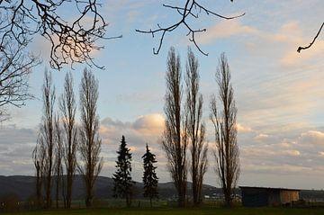 Ciel du soir avec des arbres sur Susanne Seidel