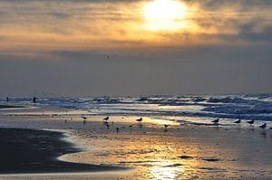 Zonsondergang Noorzeekust sur Fred van den Brink