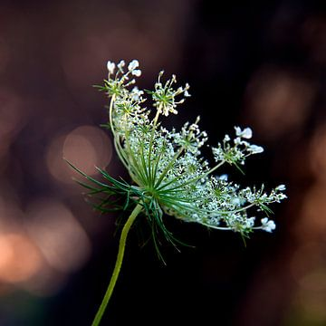Flower with lace trim sur Anouschka Hendriks