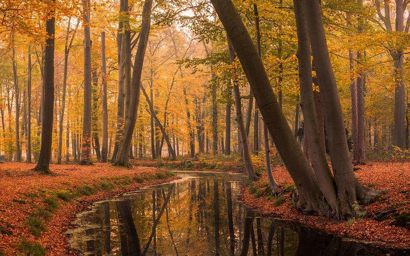 Herfst in Voorstonden van Mario Visser