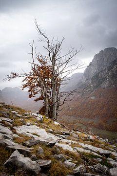 Kaal herfstboompje in de bergen van Albanie van Ellis Peeters