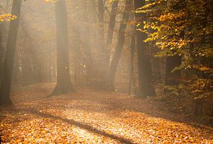 autumn in the Backlit